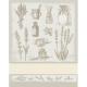 DMC - Torchon herbes aromatiques 60x80 cm